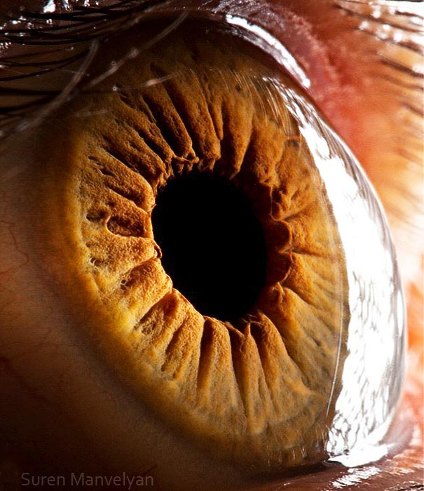 Mesmerizing Images Capture The Fascinating Complexity Of The Human Eye_Image 14