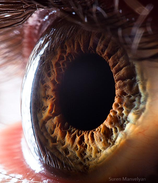 Mesmerizing Images Capture The Fascinating Complexity Of The Human Eye_Image 15