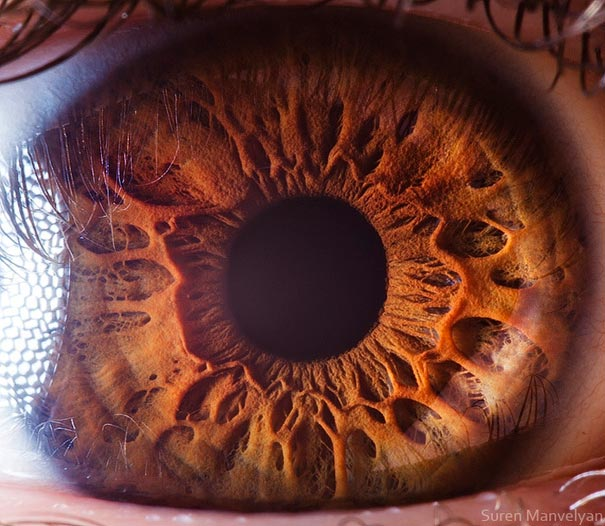 Mesmerizing Images Capture The Fascinating Complexity Of The Human Eye_Image 2