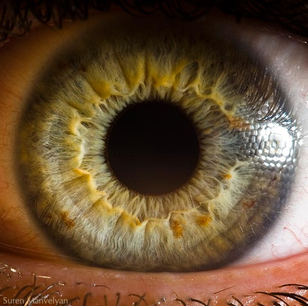 Mesmerizing Images Capture The Fascinating Complexity Of The Human Eye_Image 4
