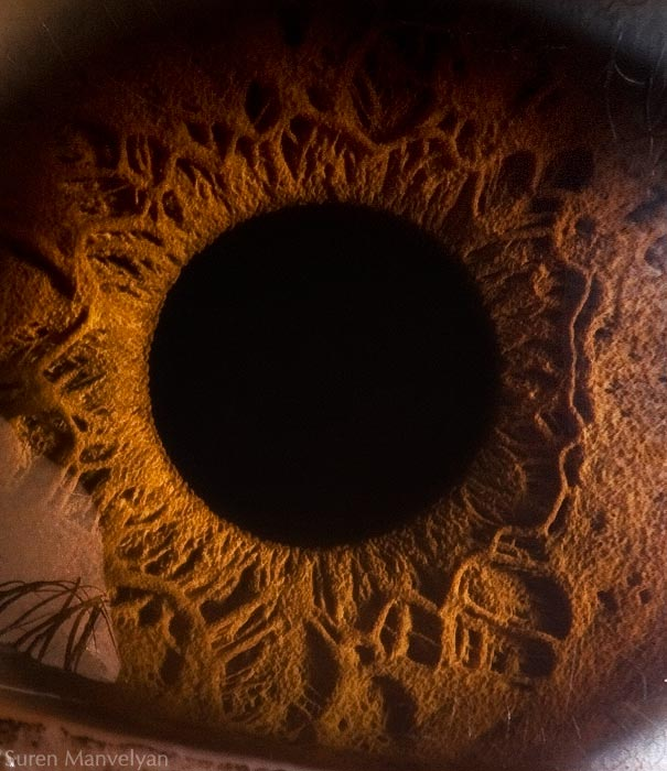 Mesmerizing Images Capture The Fascinating Complexity Of The Human Eye_Image 5