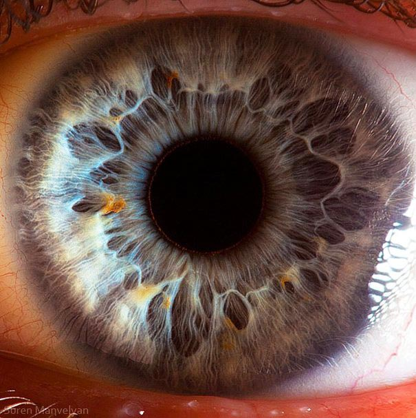 Mesmerizing Images Capture The Fascinating Complexity Of The Human Eye_Image 6
