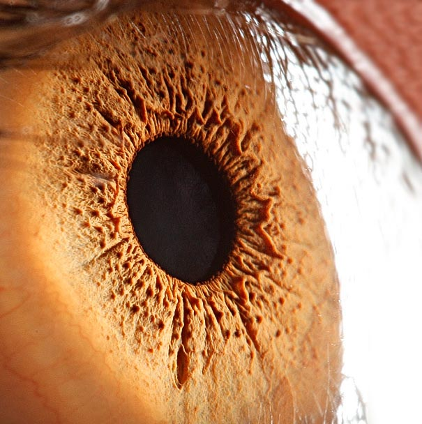 Mesmerizing Images Capture The Fascinating Complexity Of The Human Eye_Image 7