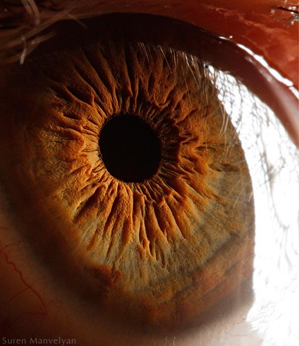 Mesmerizing Images Capture The Fascinating Complexity Of The Human Eye_Image 8