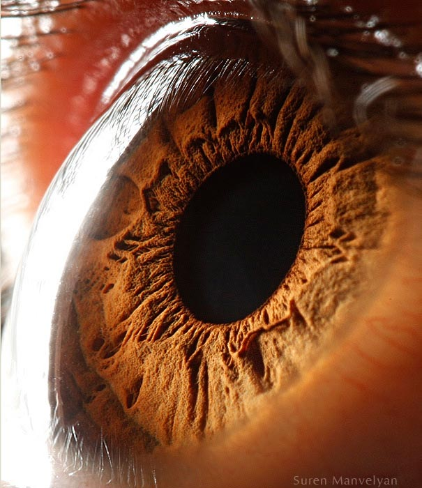 Mesmerizing Images Capture The Fascinating Complexity Of The Human Eye_Image 9