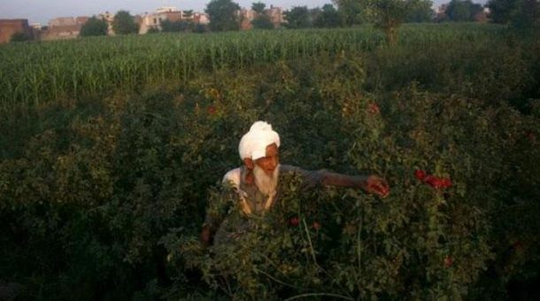 Poo-Powered Pumps Help Pakistan Farmers Grow Richer Greener_Image 1