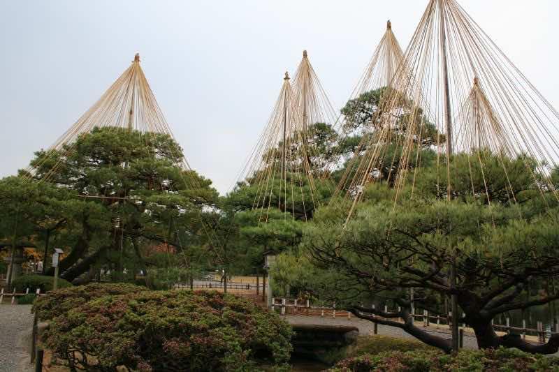 Tree suspenders in japan2