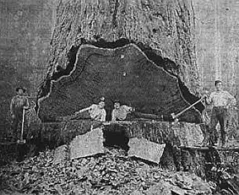California One Log House6