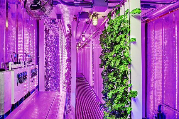 Shipping Containers Set To Redefine The Future Of Farming_Image 2
