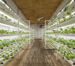 Shipping Containers Set To Redefine The Future Of Farming_Image 4