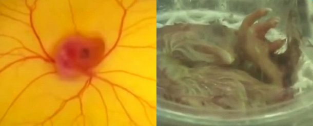 Watch The Chicks Hatch Without An Egg Shell In This Video_Image 1