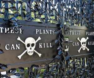 alnwick-poison-gardens