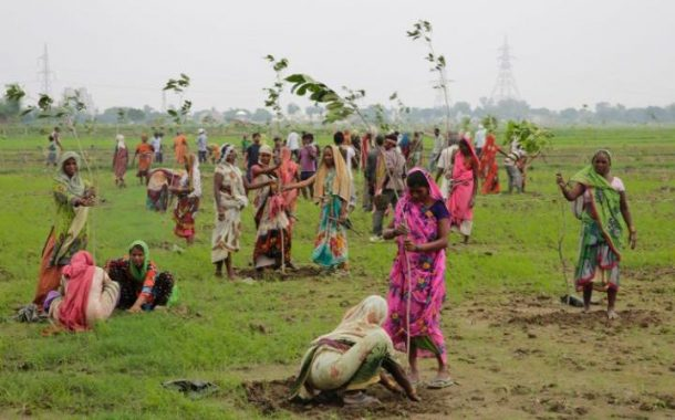 Indian women plant saplings in the attempt to set a record CREDIT: AP PHOTO/RAJESH KUMAR SINGH