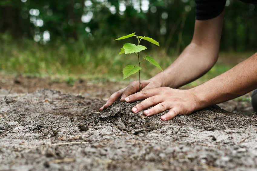 treplanting