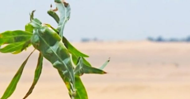 Egyptian Researchers Use Sewage To Grow Forests In The Desert_Image 0