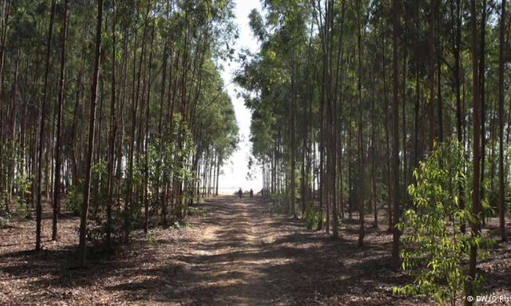 Egyptian Researchers Use Sewage To Grow Forests In The Desert_Image 1