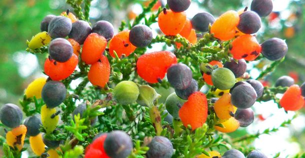 This Amazing Fairytale Tree Can Grow 40 Different Kinds Of Fruit_Image 0