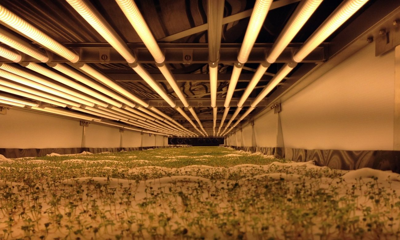 World's Largest Vertical Farm In Newark Grows Without Soil, Sunlight or Water_Image 0