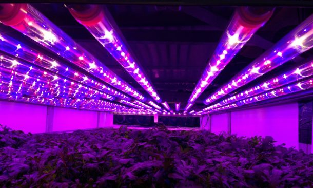 World's Largest Vertical Farm In Newark Grows Without Soil, Sunlight or Water_Image 2