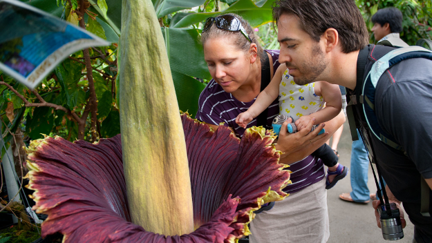Watch The World's Worst Smelling Flower Bloom Before It's Too Late