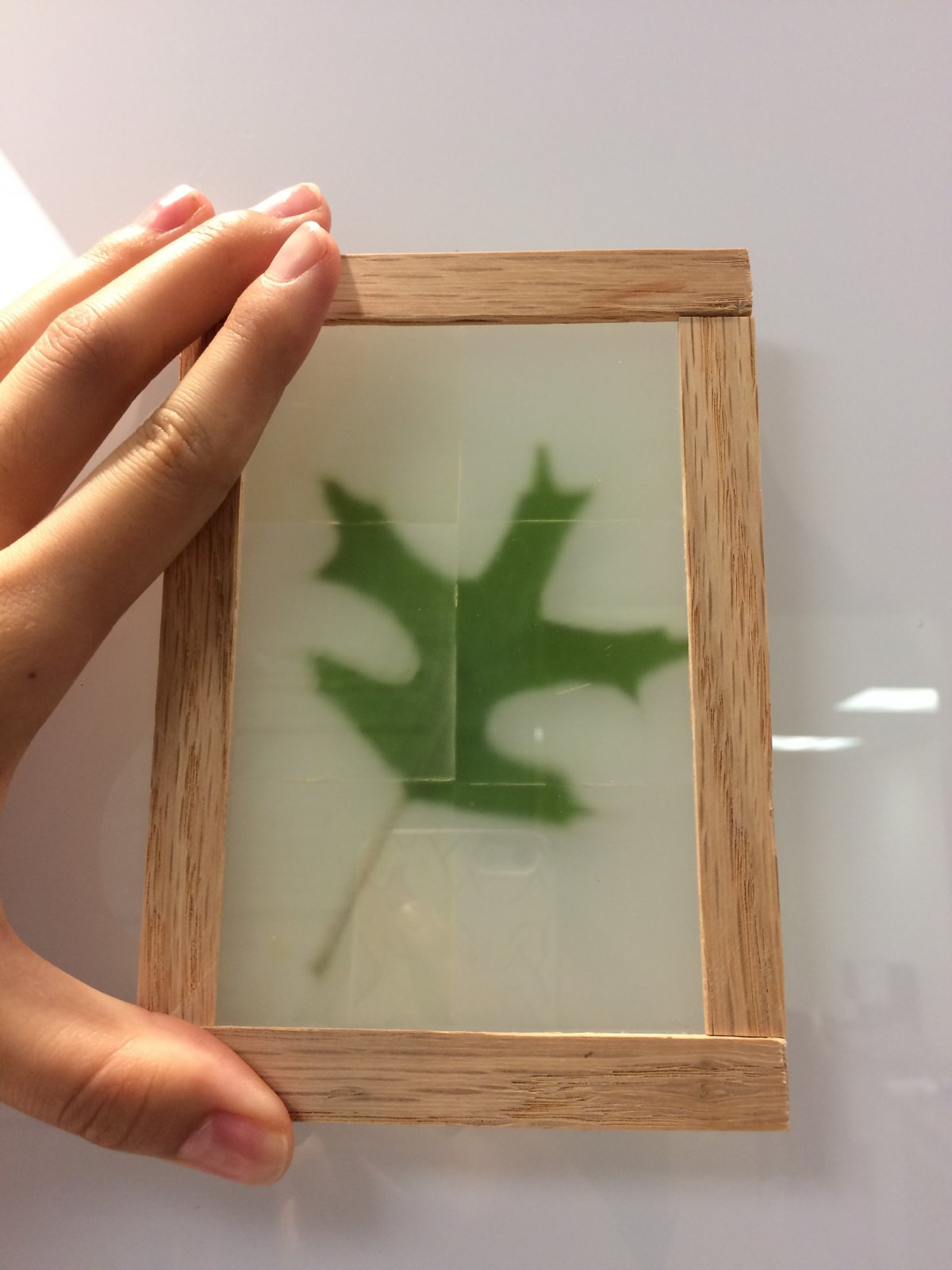 Scientists Have Made Wooden See-Through Windows Using Transparent Wood