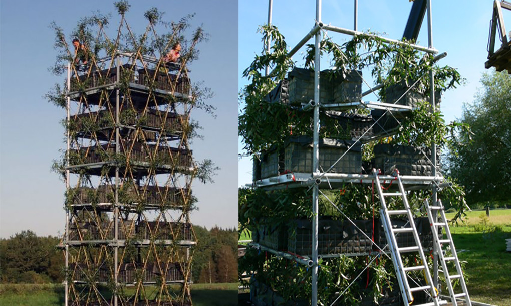 These Baubotanik Tree Houses Are Living Architectural Wonders