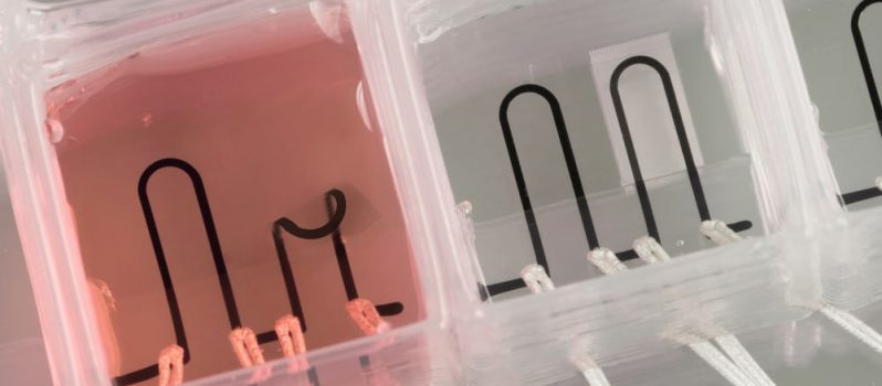 Researchers at Harvard have developed new materials that allow them to 3D print a heart-on-a-chip, with integrated sensors to simplify data collection(Credit: Johan Lind, Michael Rosnach, Disease Biophysics Group/Lori K. Sanders, Lewis Lab/Harvard University)