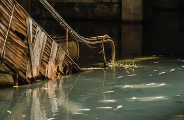 bangkok-turned-an-abandoned-shopping-mall-into-the-citys-largest-aquarium_image-1