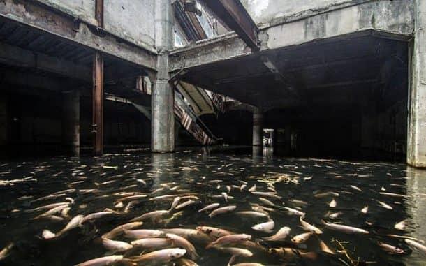 bangkok-turned-an-abandoned-shopping-mall-into-the-citys-largest-aquarium_image-2