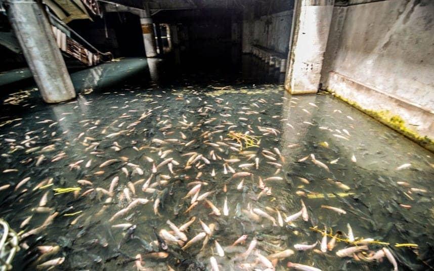 bangkok-turned-an-abandoned-shopping-mall-into-the-citys-largest-aquarium_image-8