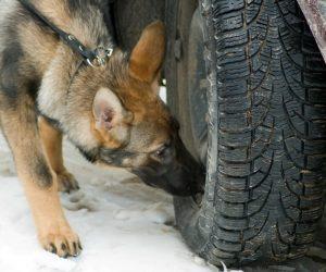 dog-sniffer-bomb-detector-2
