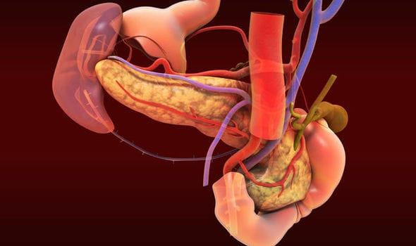 New humanorganmesentery