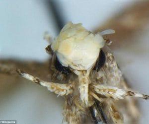 donaldtrumpi orange moth