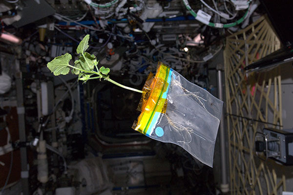 plants in microgravity (3)