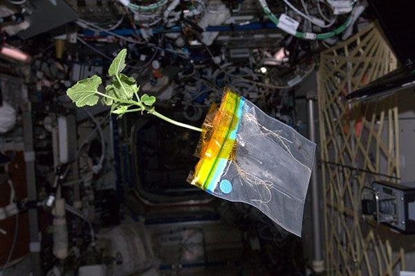 plants in microgravity (3)
