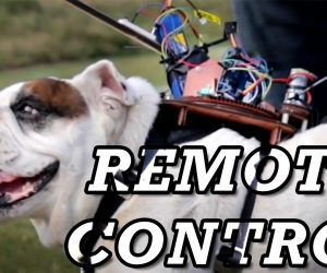 Remote control Dog