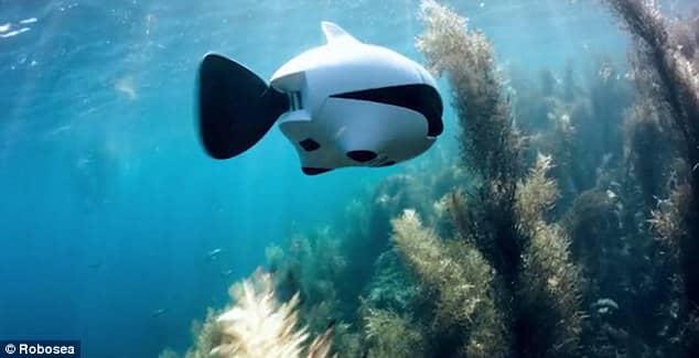 Biki bionic fish1