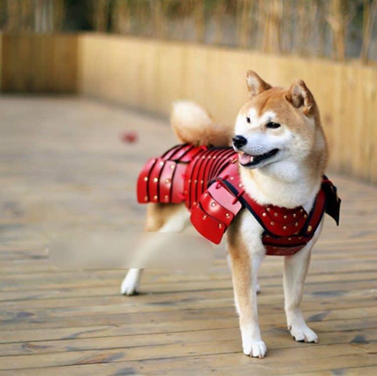 Samurai Armors For Pets (1)
