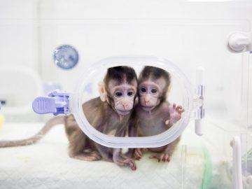 cloned