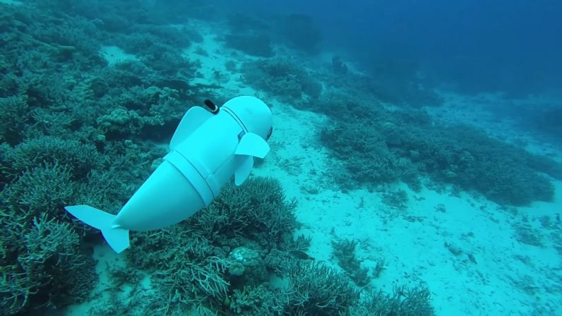 SoFi Robotic Fish