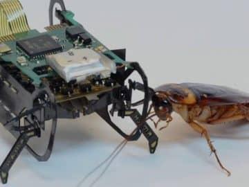 HAMR cockroach robot