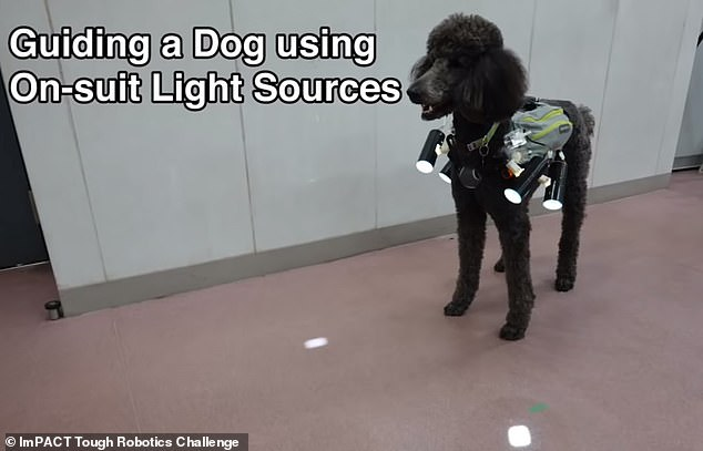 smart vest to control movement of dogs