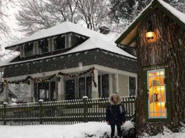 A 110-Year-Old Tree Has Been Converted Into A Little Free Library!