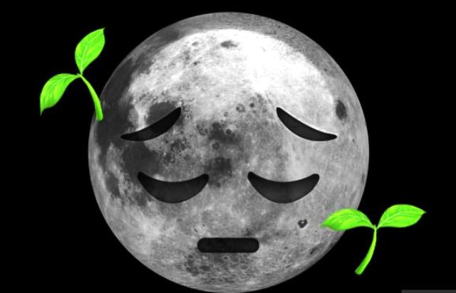 The First Plants On The Moon Have Frozen To Death!