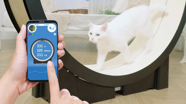 The Little Cat By Pet Ding Is A Smart Treadmill For Cats!