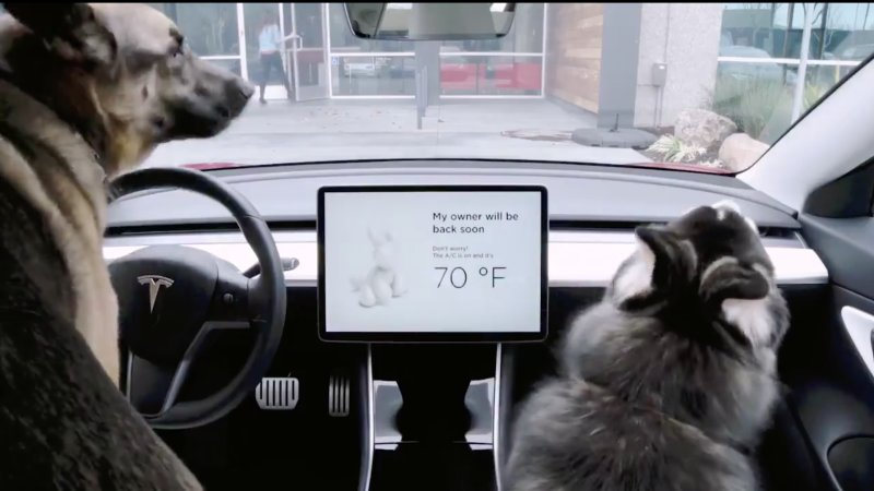 Tesla's Dog Mode Will Make Sure That Your Pet Remains Safe In The Car