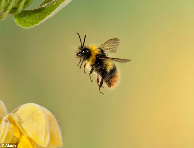 Bees Are Good At Mathematics, Australian Research Concludes!