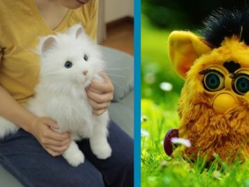 Check Out The Seven Cutest Robots That You Can Buy!