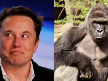 Elon Musk Begins His SoundCloud Rapper Career With RIP Harambe!