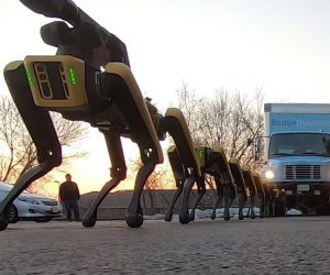 SpotMini Robot Dogs Pull A Truck In The Parking Lot!